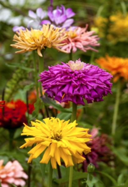 summer-flowers-2-1434409-m