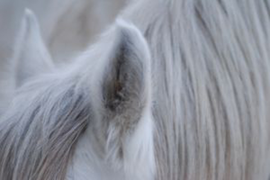 horses-4-938290-m